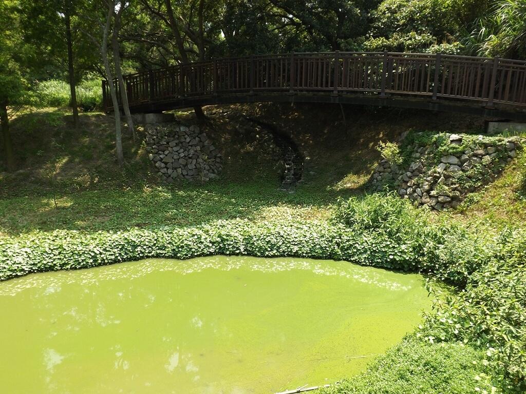 新竹青青草原的圖片:陽光下呈現綠色不透明的生態水池