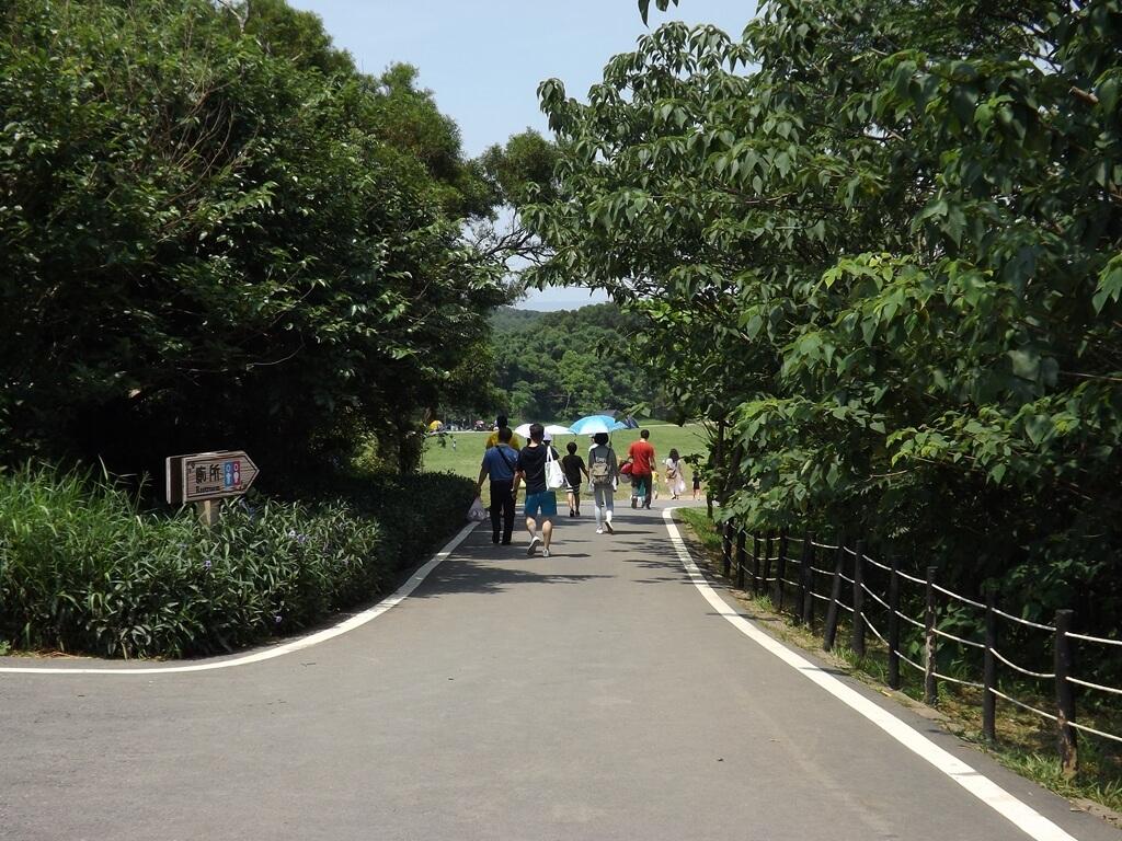 新竹青青草原的圖片:通往青青草原柏油路