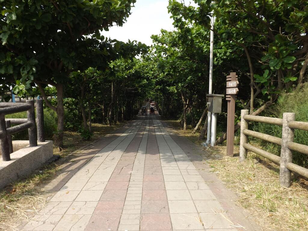 新竹海天一線看海區的圖片:舒適的綠色隧道