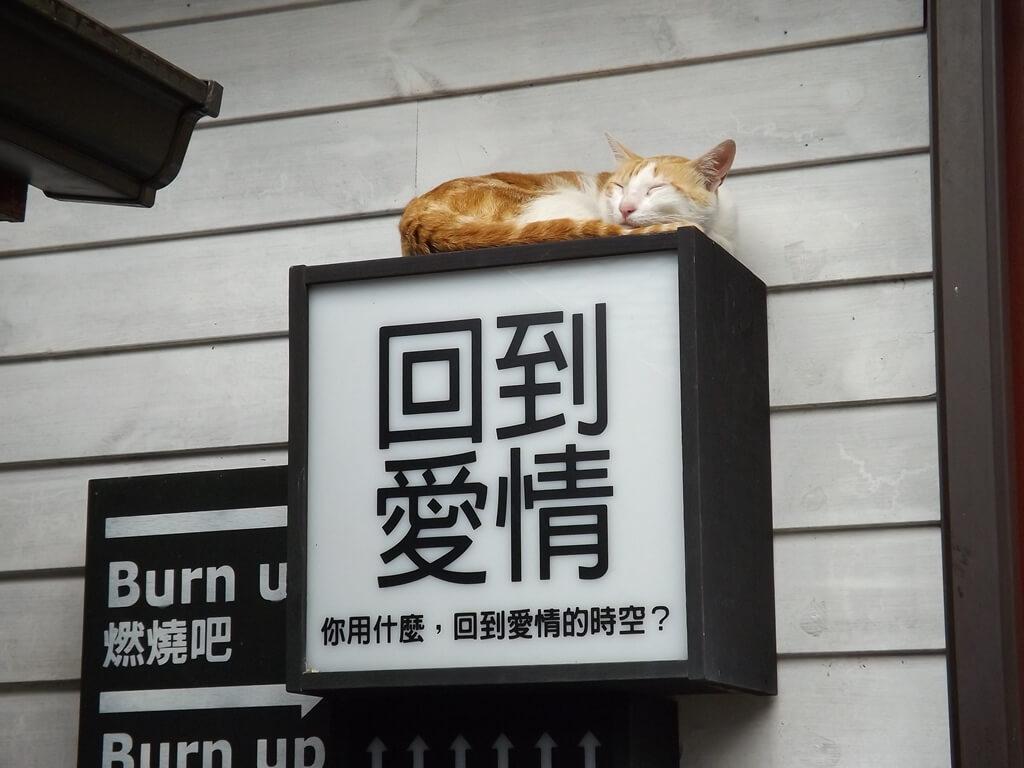 合興車站的圖片:回到愛情與睡覺的貓咪