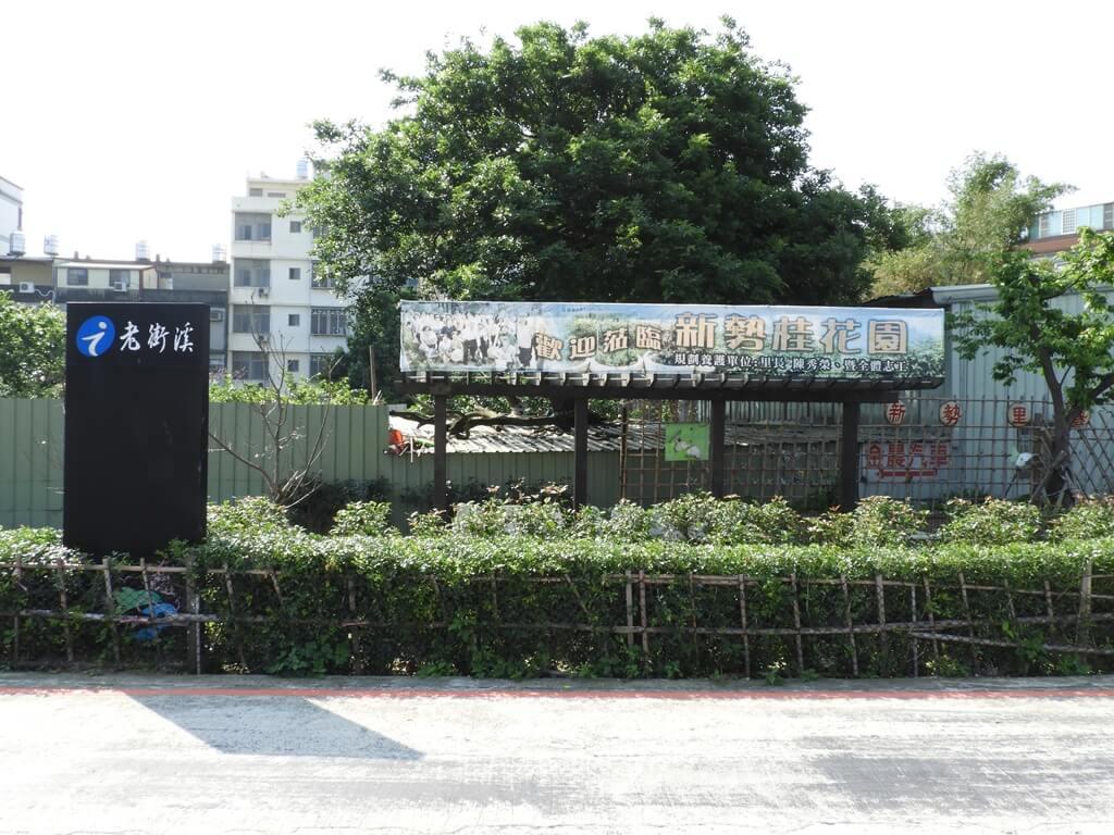 中壢老街溪步道的圖片:由當地里長所規劃養護的新勢桂花園