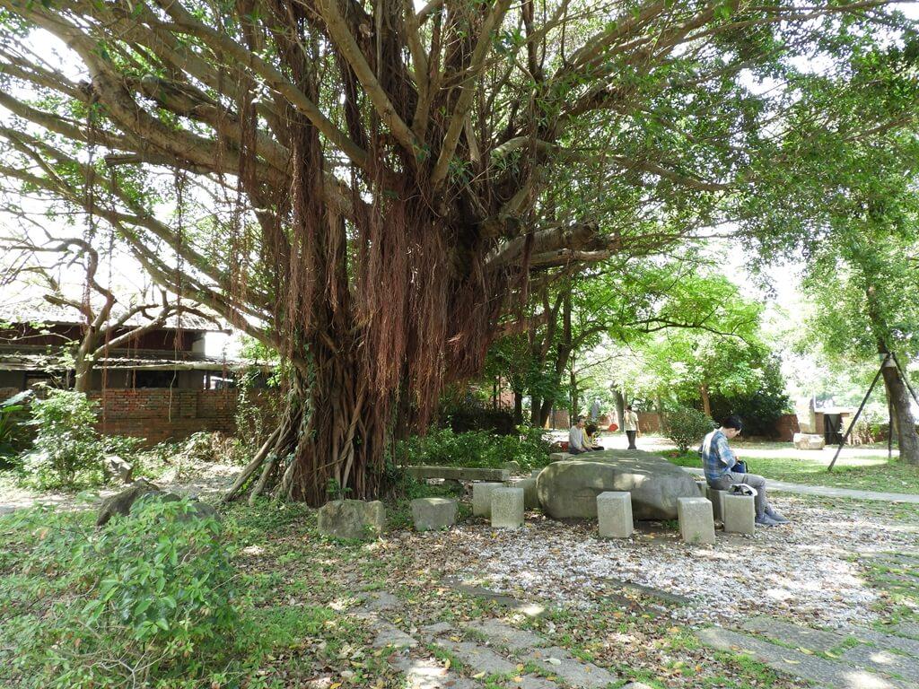 淡水文化園區 - 殼牌倉庫的圖片:殼牌故事館及倉庫間的老榕樹