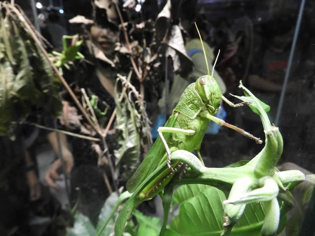 新竹市立動物園的圖片:第94張照片