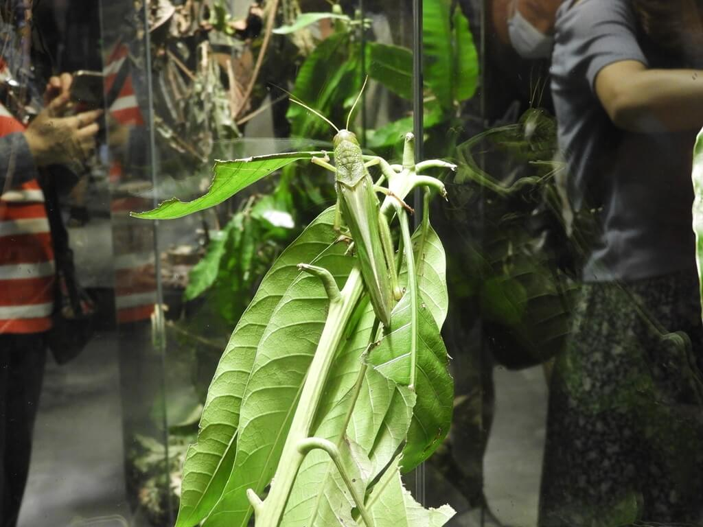 台灣昆蟲館 - 新竹館的圖片:第12張照片