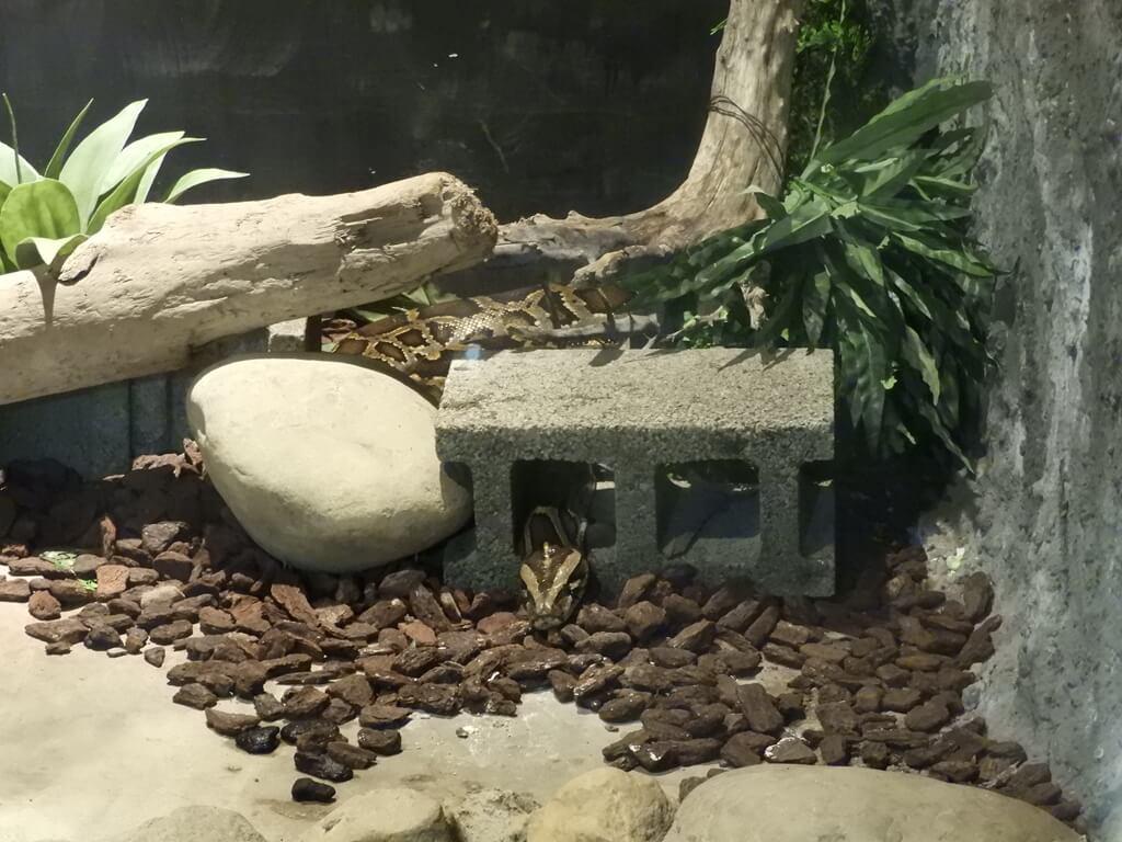 台灣昆蟲館 - 新竹館的圖片:第18張照片