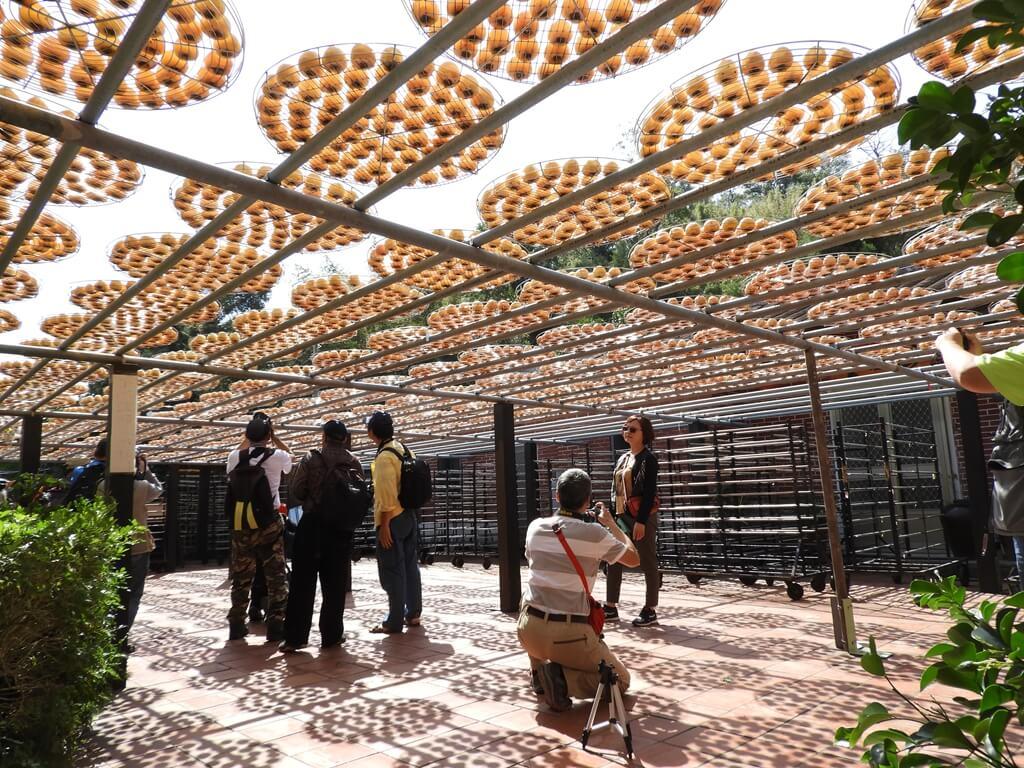 金漢柿餅教育農園的圖片:第27張照片