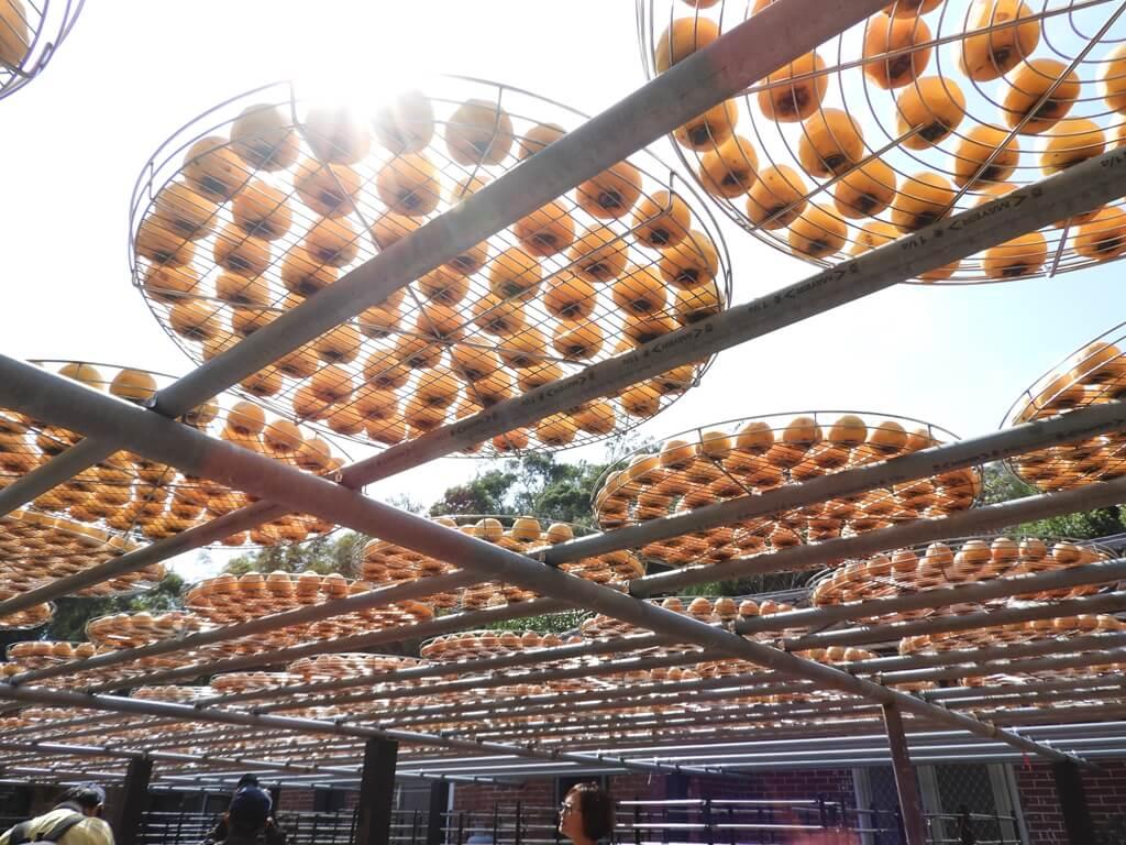 金漢柿餅教育農園的圖片:第29張照片