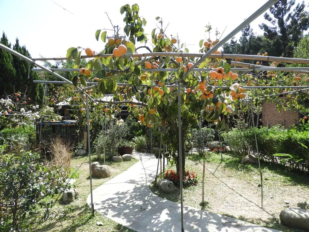 金漢柿餅教育農園的圖片:第36張照片