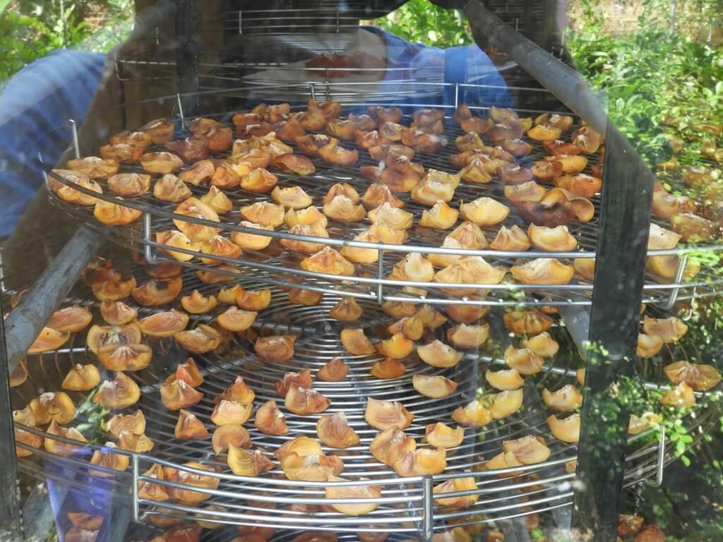金漢柿餅教育農園的圖片:第37張照片