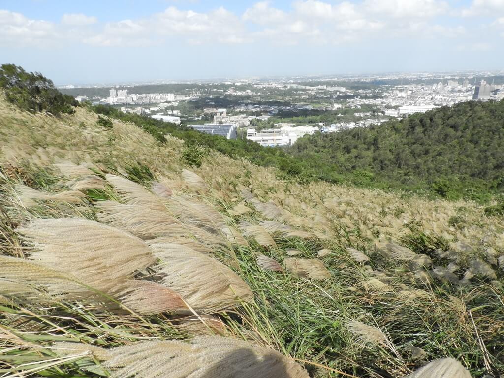 楊梅秀才登山步道的圖片:第69張照片