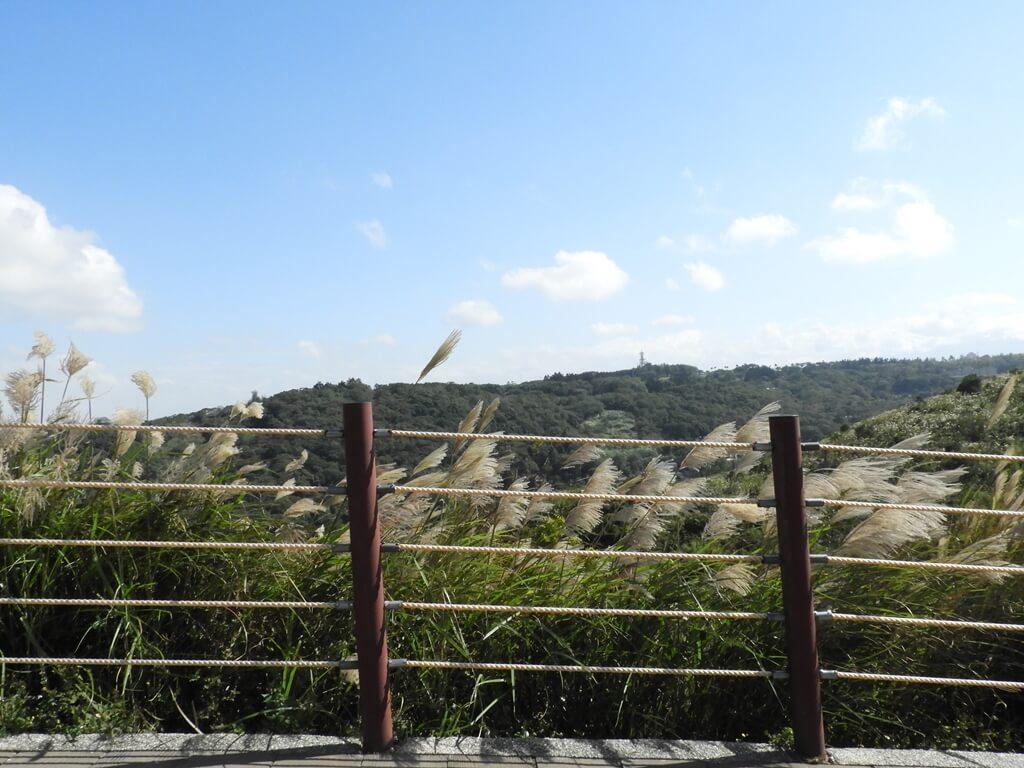 楊梅秀才登山步道的圖片:第74張照片