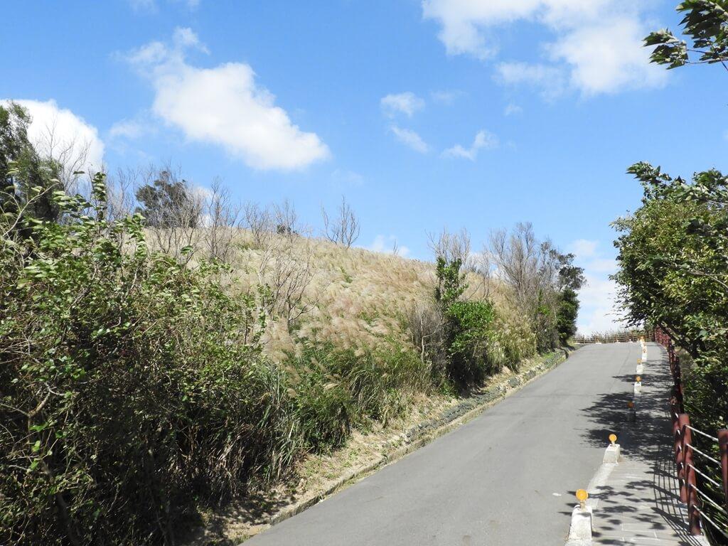 楊梅秀才登山步道的圖片:第76張照片