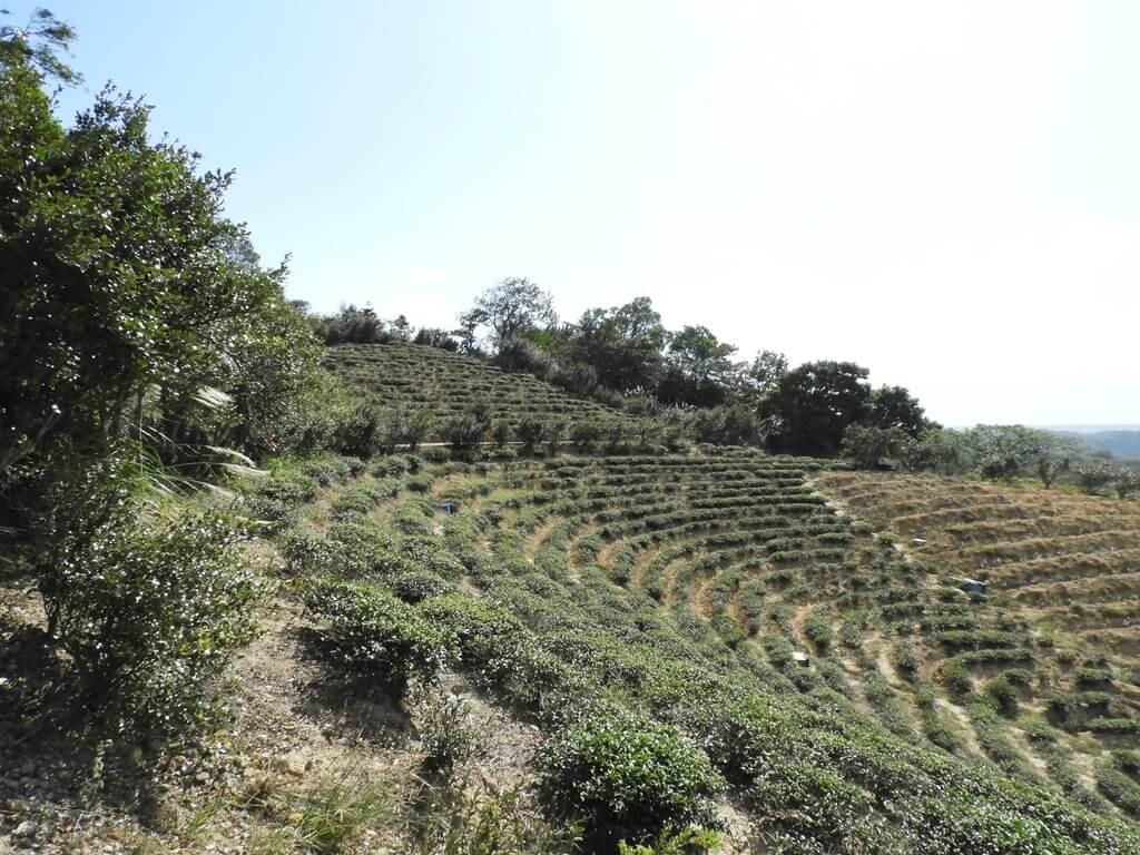 楊梅秀才登山步道的圖片:第81張照片