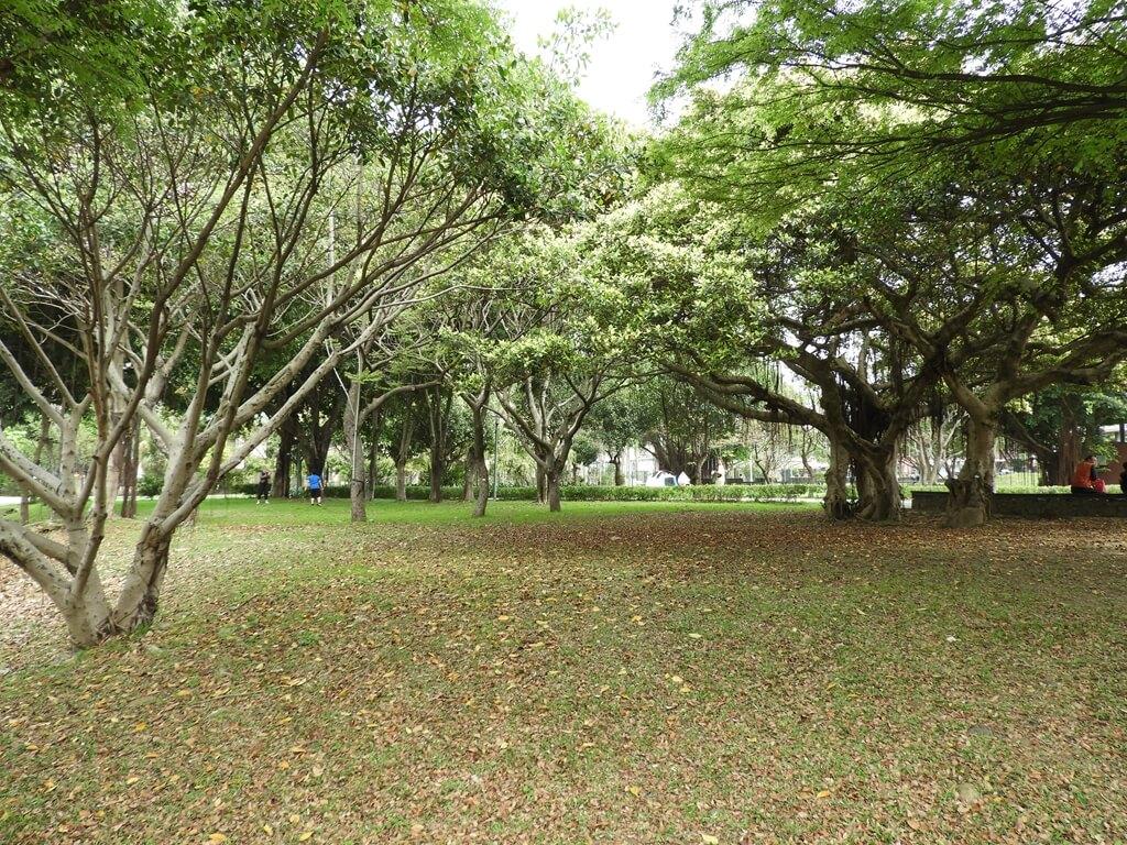 平鎮新勢公園的圖片:第64張照片